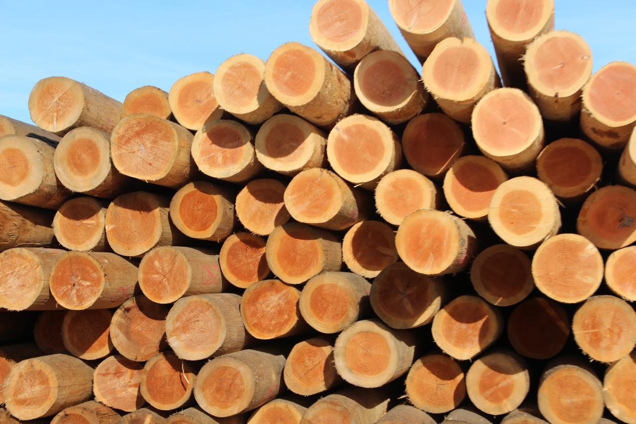 Mišką valdantys gyventojai mokestį už parduotą medieną ir nenukirstą mišką privalo sumokėti iki liepos 15 d.