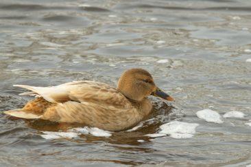 Žiemojantys paukščiai Tauragėje